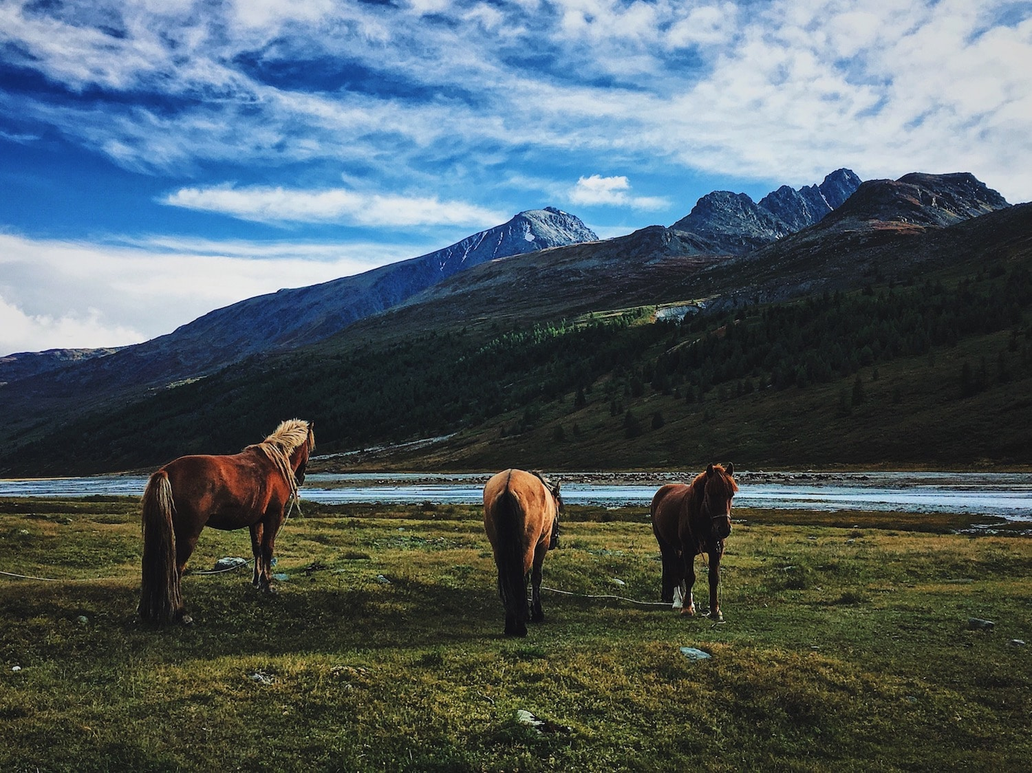 bear_valley_horses